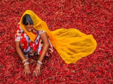 First-ever organic food festival to be held in Delhi to promote the sector